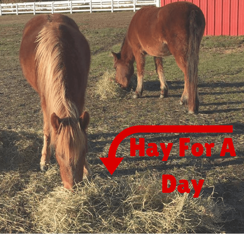 Hay For A Day