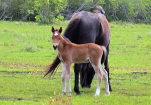 Sergio - Wild Colt.  This picture was taken May 28, 2013!  He was the first born of the spring.