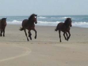 Horses running on the beach