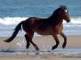 Corolla Wild Horses Album