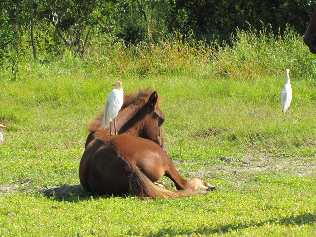 horses-07