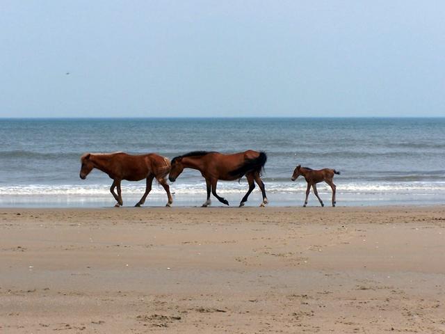 horses-37