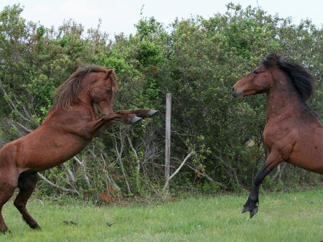 horses-39