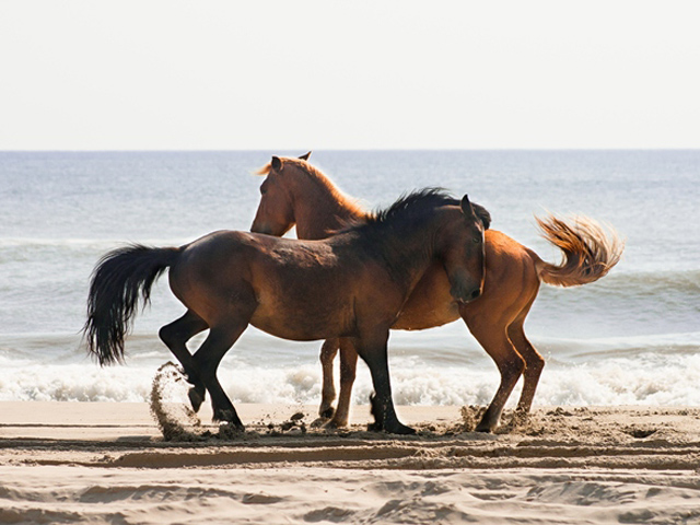 corolla wild horses gallery