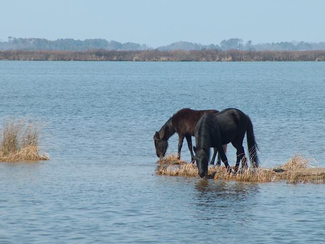 horses-45