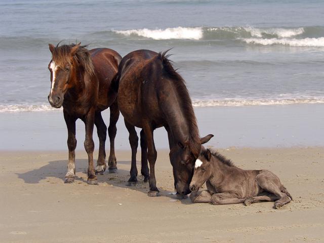 horses-48
