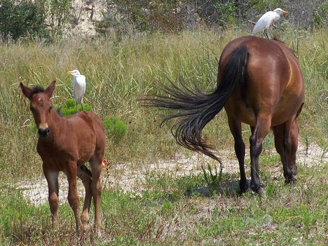 horses-56