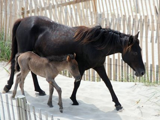 horses-57