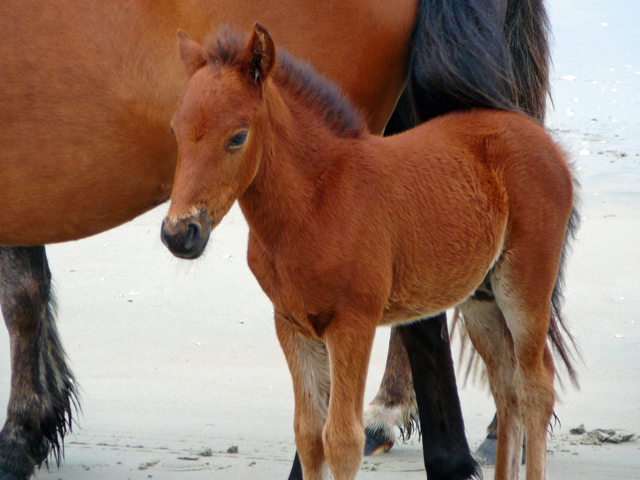 horses-59