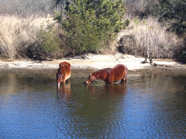 horses-61