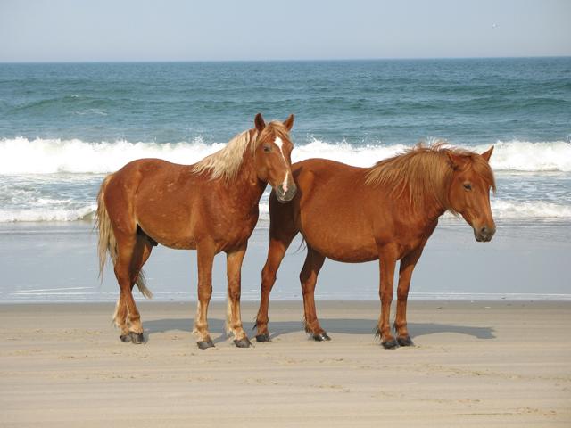 horses-63