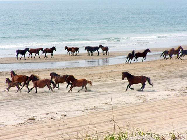 horses-65