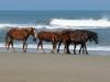 horses-01