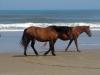 horses-02