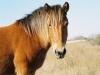 horses-24