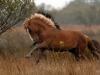 horses-28