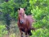 horses-32