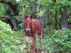 horses-36
