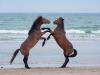 horses-38