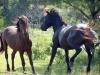 horses-40