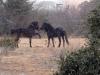 horses-41