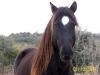 horses-42