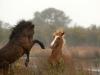 horses-44