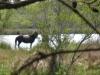 horses-46