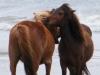 horses-52