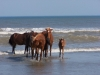 horses-53