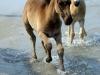 horses-55