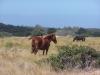 horses-64