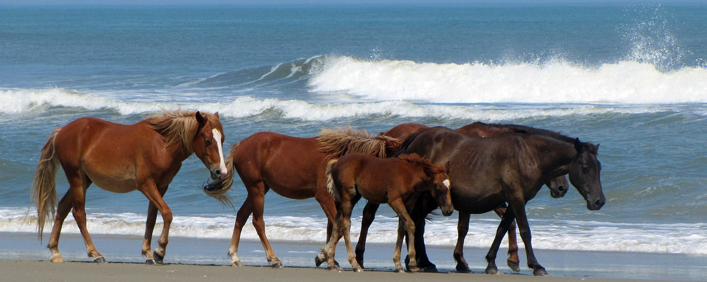 corolla wild horses - tours