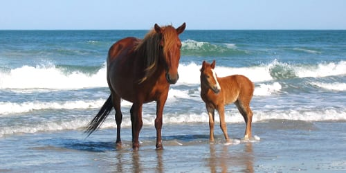 See The Wild Horses