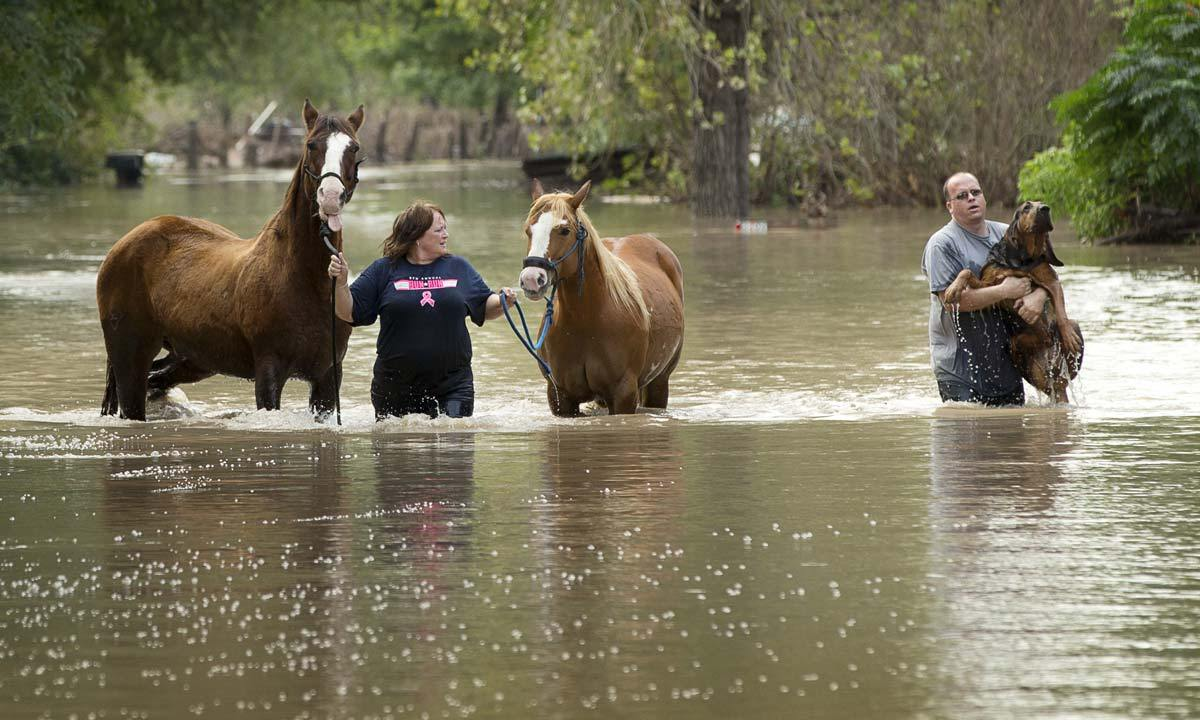 How To Adopt Dogs From Flood Victims Texas