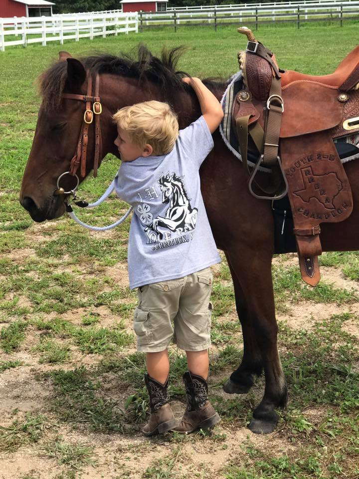 Adoption Horses In Texas - Best Horse Image 2018