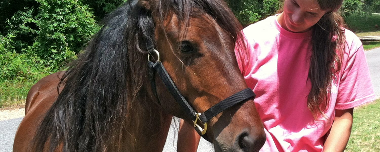 Adoption Program – Corolla Wild Horse Fund