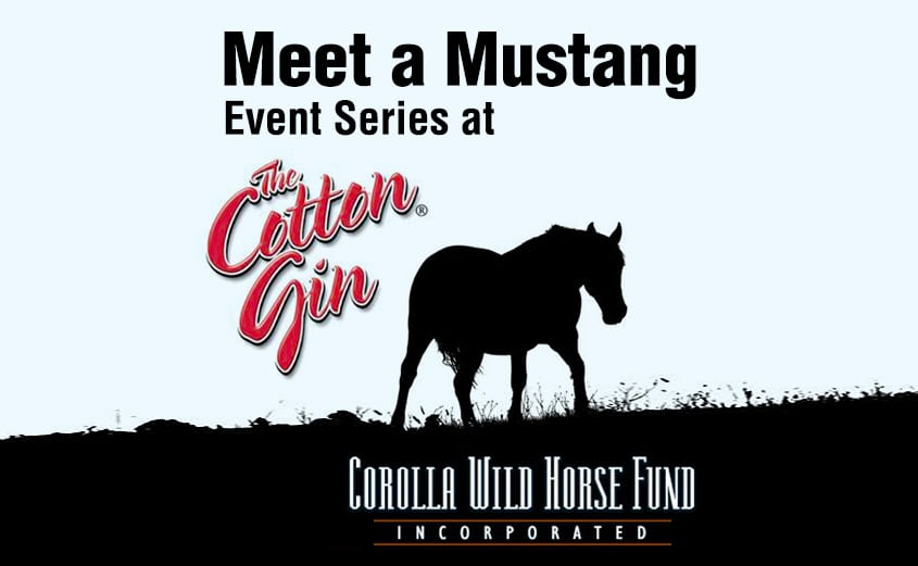 Corolla Wild Horse Fund events - Meet a Mustang