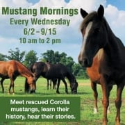 Corolla Wild Horse Fund Mustang Mornings 2021