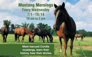 Corolla Wild Horse Fund events - meet a rescued Mustang Mornings