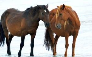 Meet a Mustang